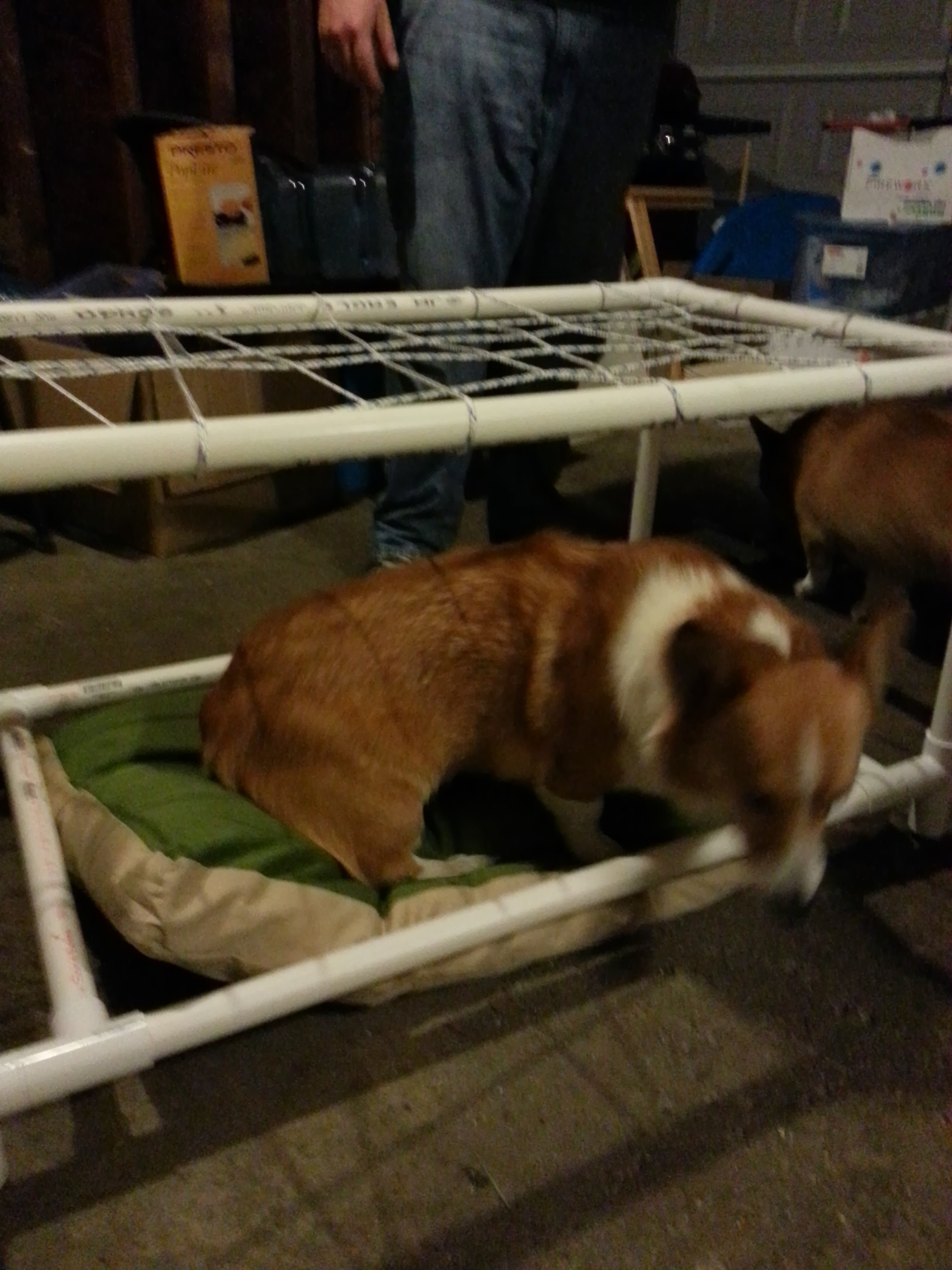 In progress with Roscoe doing some bottom bunk testing.